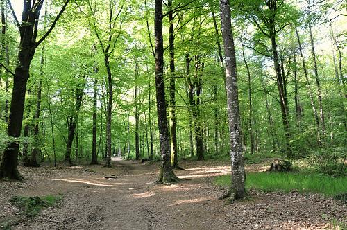 GoodPlanet - des forêts et des Hommes