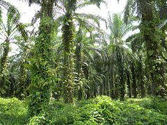 Des forêts et des Hommes - Goodplanet