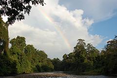 GoodPlanet - des forêts et des Hommes - indonésie